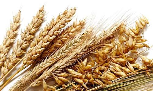 fibre cereali